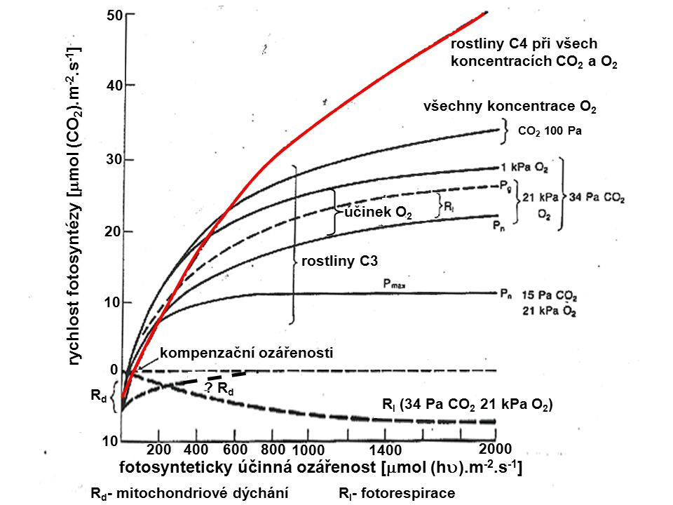 rychlost fotosyntézy [mmol (CO2).m-2.s-1]